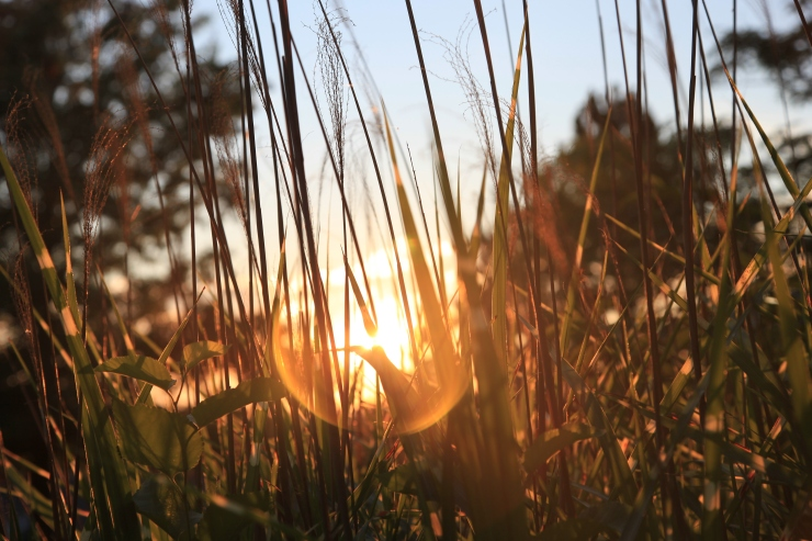 a bright future - sunset - russ murray - remages